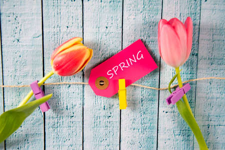 Spring background with tulips Stock Photo
