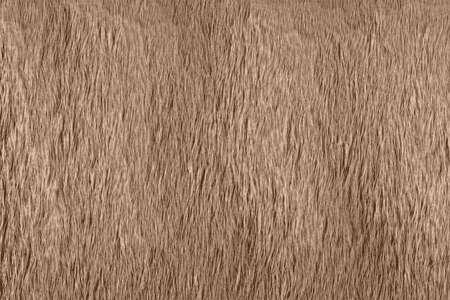 Animal brown fur background