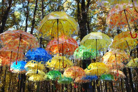 bright multi-colored rain umbrellas are suspended in the autumn park