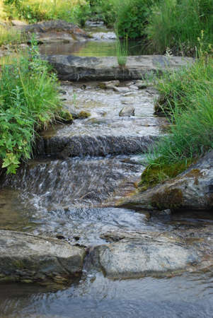 mountain stream amid tall and dense green grass