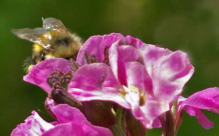 ペダルに蜂 写真素材