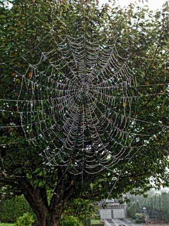 Enorme Spinneweb Stockfoto