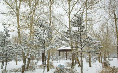 inner mongolia: snow scene in Inner Mongolia