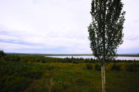 Inner Mongolia grassland and Poplar tree