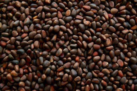 pine nuts: Background of pine nuts Stock Photo