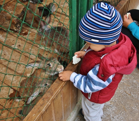 Cute Little boy feeding rabbits in farm