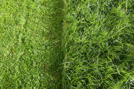 partially cut grass lawn. Part of lawn has been cut and other part was not cut