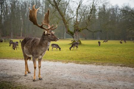Deer on territory of medieval castle Blatna in Czech Republic