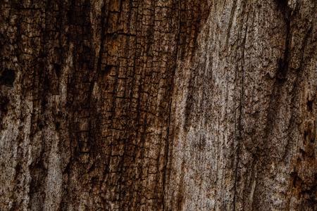 Oak tree bark texture, wooden background