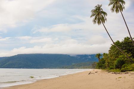 Beautiful empty morning Samui beach with palm trees