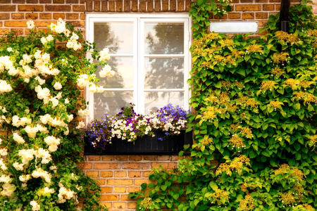 Brick wall with windows and flower boxes with flowering plants in small swedish town Raa