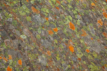 Moss on stone, colorful natural backgroung, Svartisen, nord Norway Stock Photo - 105409783