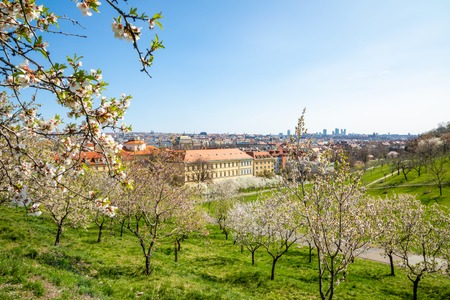Blooming apple tree in spring Prague Petrin hill with city veiw in Czech Republic Foto de archivo - 121435860