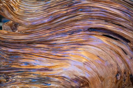 Sandalwood closeup, tree texture background, artificial incision Archivio Fotografico