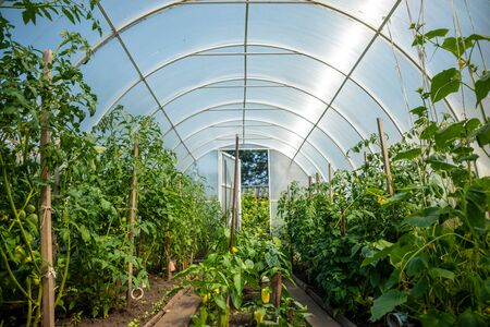 Inside private greenhouse with plants in home garden, Russia Banco de Imagens