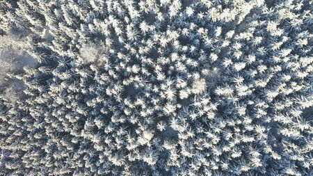 Top view of white spruce trees covered in fresh snow on sunny winter day in mountain next to Liberec, Czech Republic