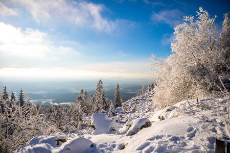 White spruce trees covered in fresh snow on sunny winter day in mountain next to Liberec, Czech Republic