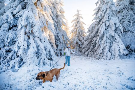 Young woman walking with dog between white trees covered in fresh snow on sunny winter day in czech mountain 版權商用圖片