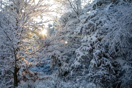 White trees covered in fresh snow on sunny winter day in mountain next to Liberec, Czech Republic