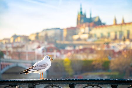 Seagull chiling among Prague castle, sunset sky and river Vltava in Prague in Czech republic 版權商用圖片 - 138224063