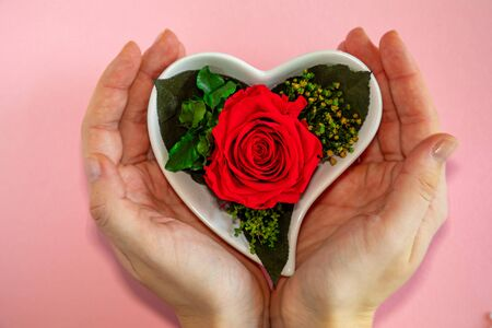 Flower red rose in a heart-shaped pot on a pink background, top view, valentines day beckground 版權商用圖片