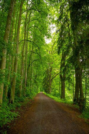 Walking path in beautiful, old deciduous forest in Konopiste, Czech Republic