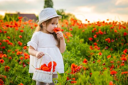 Little cute girl with a basket with bouquet of poppies stands in a field of poppies in Czech repablic Фото со стока