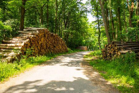 A lot of sawn tree near rural road in the forest in Czech republic Foto de archivo