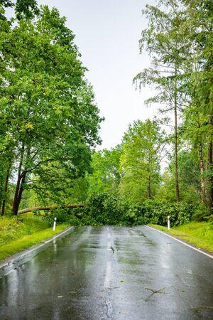 Large tree fallen across rural road in Czech republic, Europe