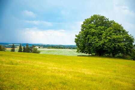Spring rural landscape with field of white poppy and big tree in cloudy day in Czech Republic Фото со стока