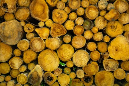 Wooden natural sawn logs as background, a lot of sawn tree, texture