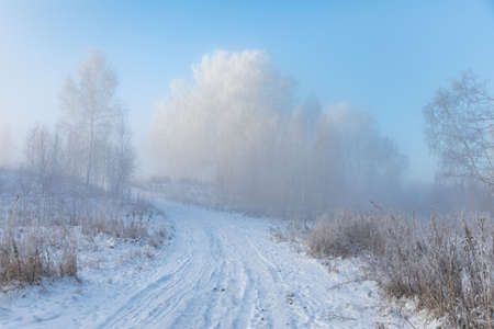Birch trees are covered with hoarfrost and snow against a blue sky. Winter frosty landscape in Siberia, Russia Banco de Imagens