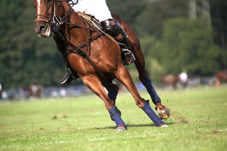 polo sport: A horse in motion during a polo competition Stock Photo