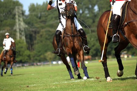 polo sport: Two horses  in motion during a polo competition