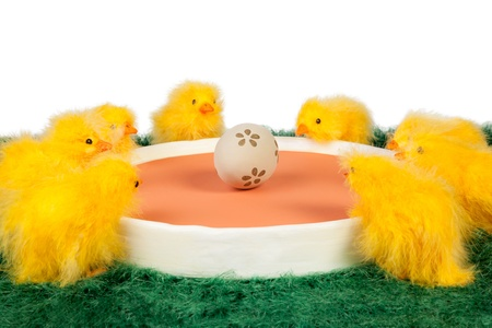 encircling: Portrait of Easter chicks miniature and decorated egg at the center Stock Photo
