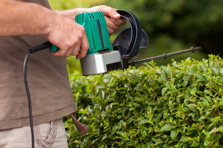 electric trimmer: A Men trims the high hedges with an electric hedges trimmer  Stock Photo