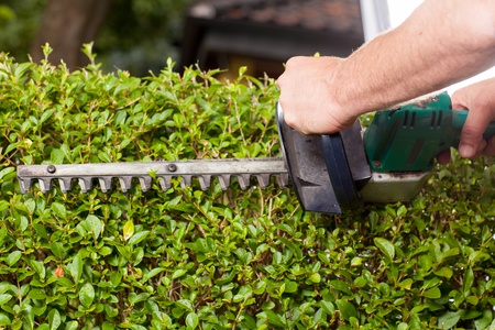 The Gardener is styling the Hedges with a electric hedge shears Stock Photo - 21550791