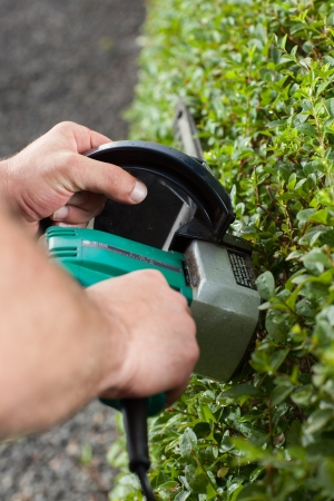 A Man is trimming the Hedge during a sunny day  Stock Photo