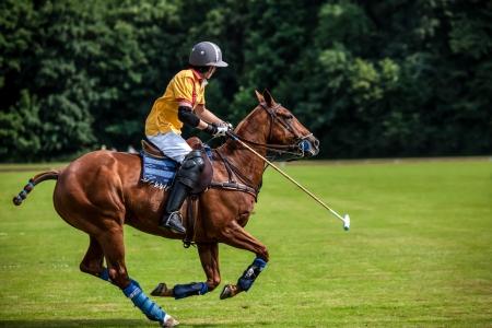 polo: Een Polo-speler raakt de Polo bal met een stok Stockfoto