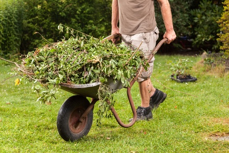 The gardener is carrying the garden waste via a hand barrow to the next compost heap Stock Photo