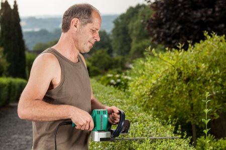electric trimmer: A Gardener is cutting the hedge at a sunny day. Stock Photo