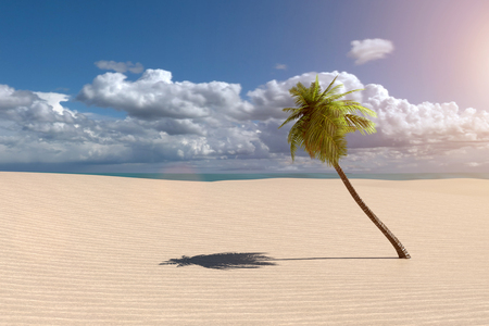 A 3D rendering from a beach scenery with a palm tree and an ocean in the backgroud. Stock Photo