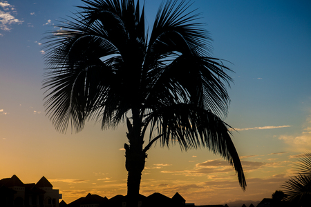 A Silhouette from a palm tree at sunrise