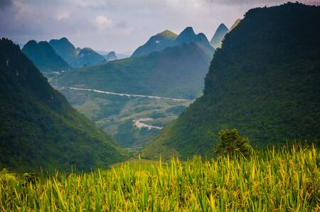 Terrace of rice on the harvest season at HaGiang province, the famous tourist destination in northwest Vietnam