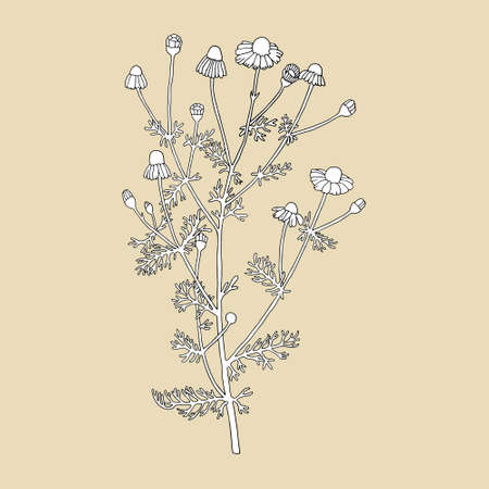Daisies on a beige background. Can be used for postcards, invitations, advertising, web, textile and other.