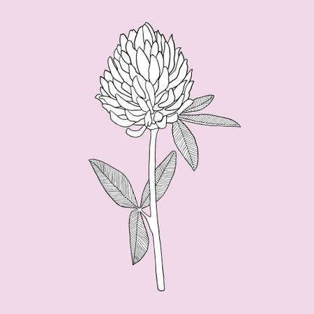 Clover on a pink background. Can be used for postcards, invitations, advertising, web, textile and other.