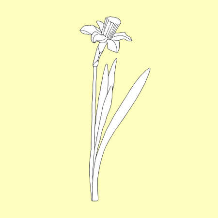 Monochrome narcissus on a yellowish background. Can be used for postcards, invitations, advertising, web, textile and other.
