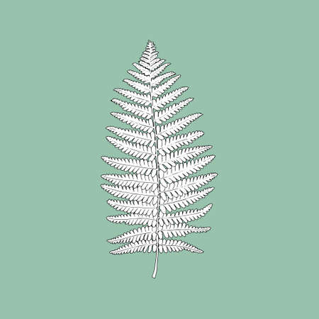 Monochrome fern leaf on a green background. Can be used for postcards, invitations, advertising, web, textile and other.