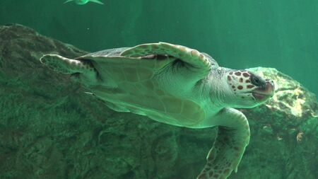 Reptiles And Sea Turtles Stock Photo