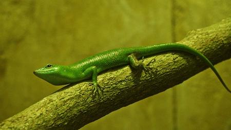 沙羅曼蛇やトカゲ爬虫類 写真素材